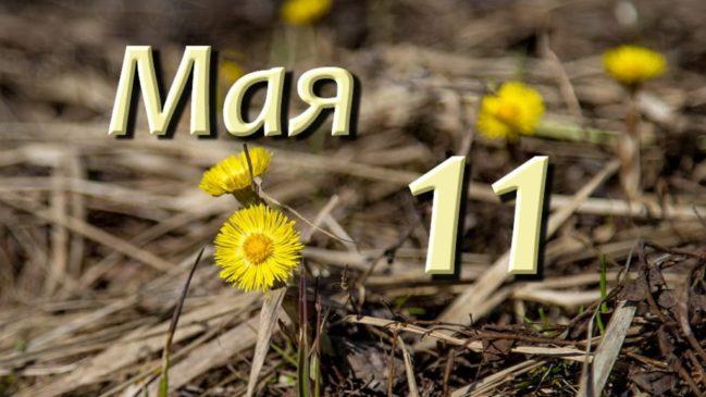 11 мая