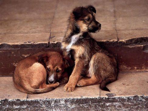 Бездомные щенки