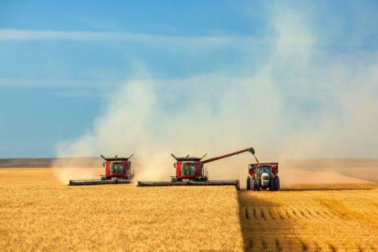 Уборка пшеницы комбайном