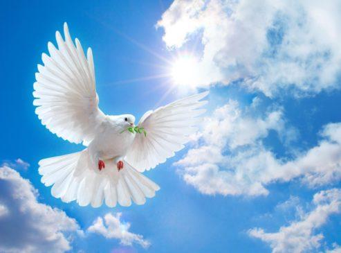 Белый голубь в мирном небе